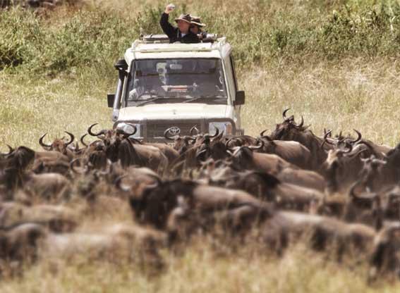 AWS-Lrover-wildebeest