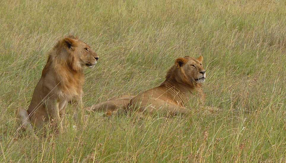 Serengeti--G1