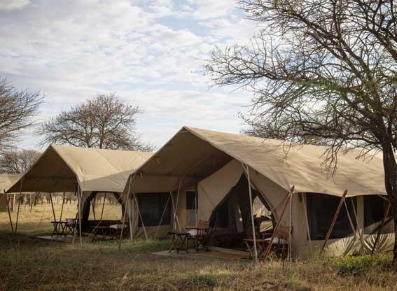 Serengeti-safari-camp-tents