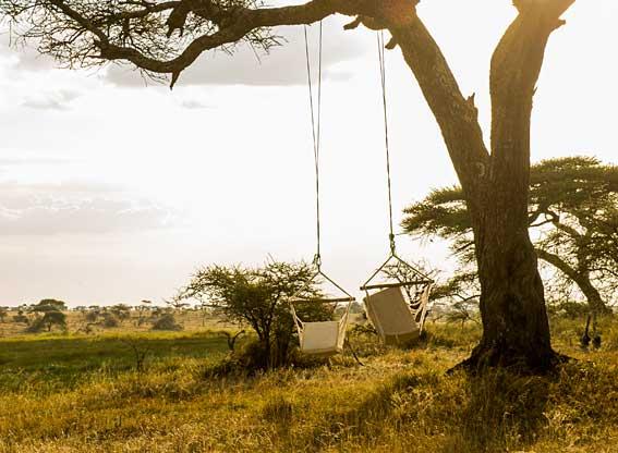 tree-swings