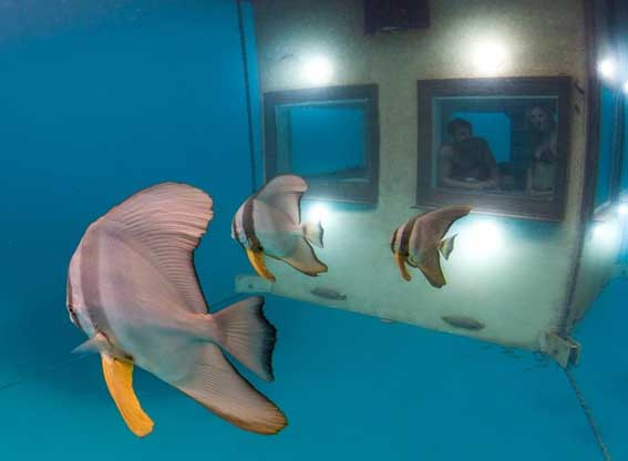 underwater room fish