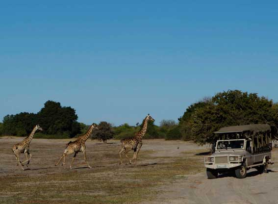 Chobe-game-lodge-G4