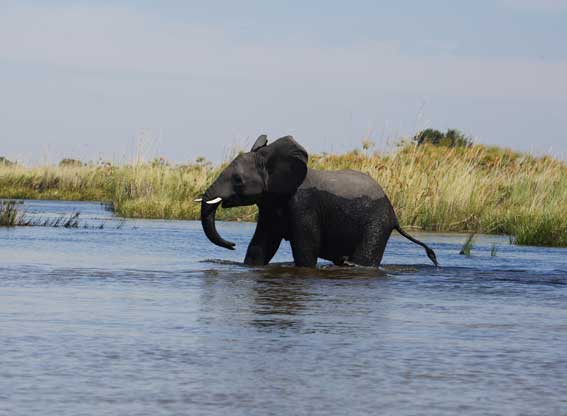 Chobe-game-lodge-G7