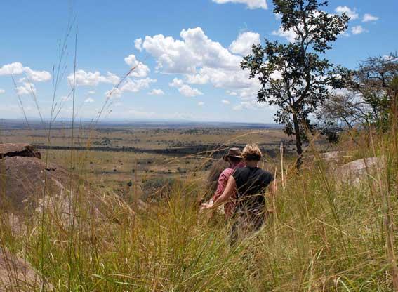 Lamai-Serengeti-G8
