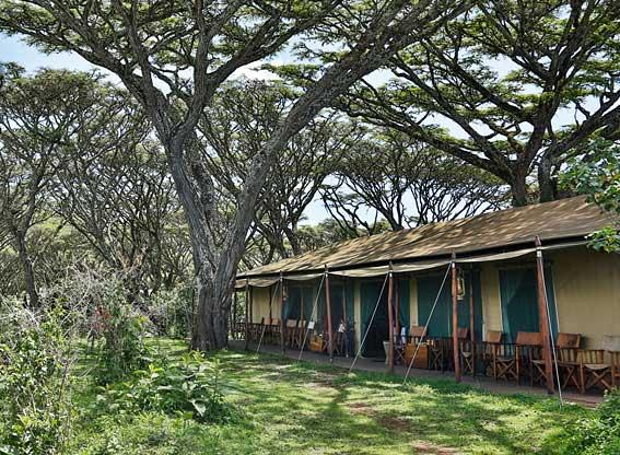 Lemala-Ngorongoro-G1