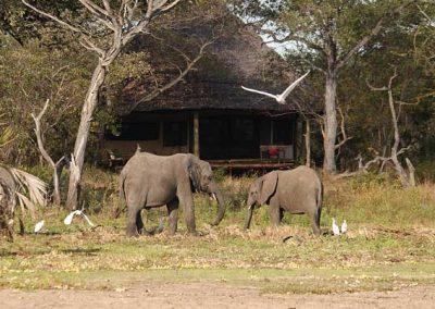Siwandu