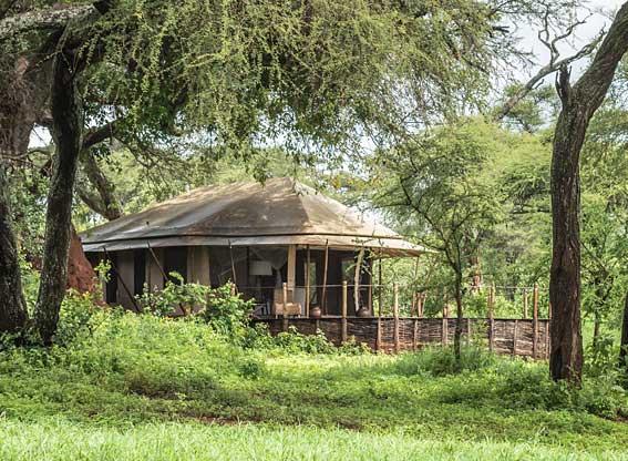 Swala-camp-G11