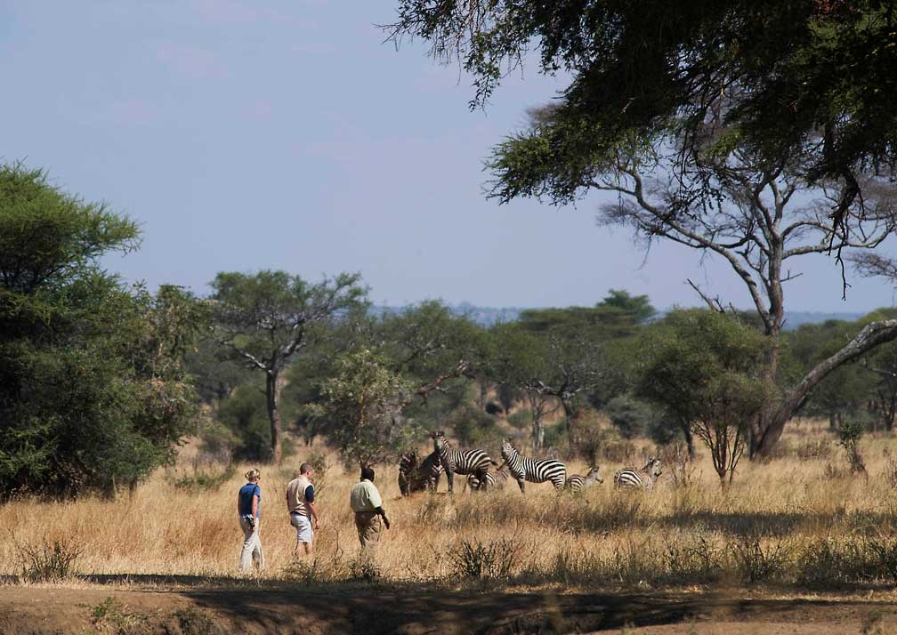 Swala Camp walking safari