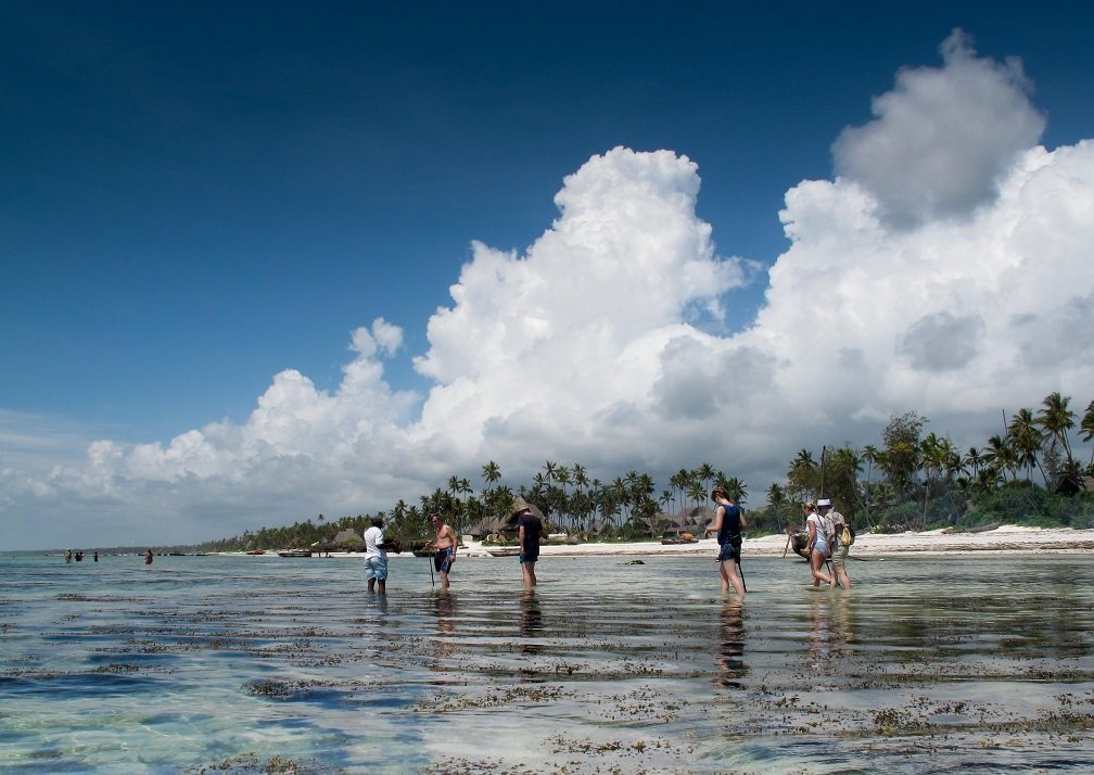 Matemwe Retreat reef walk