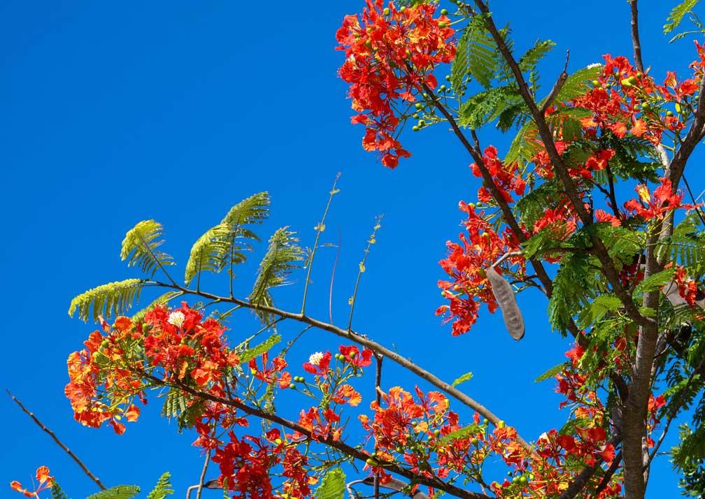 Flowers at Qambani