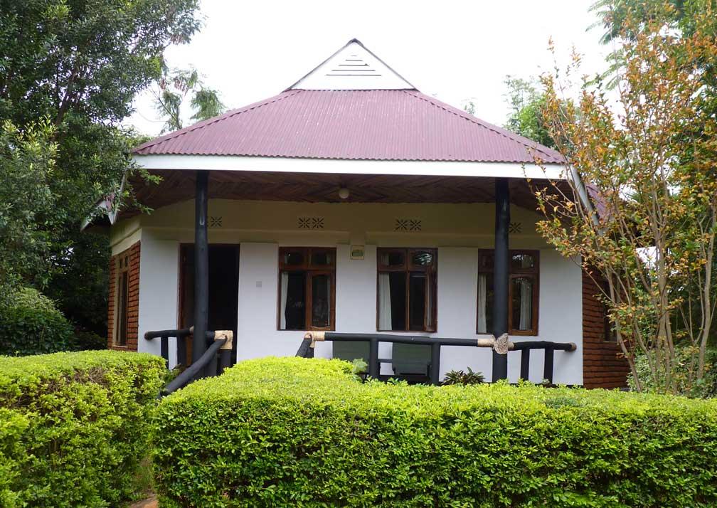 Bougainvillea-R19-1