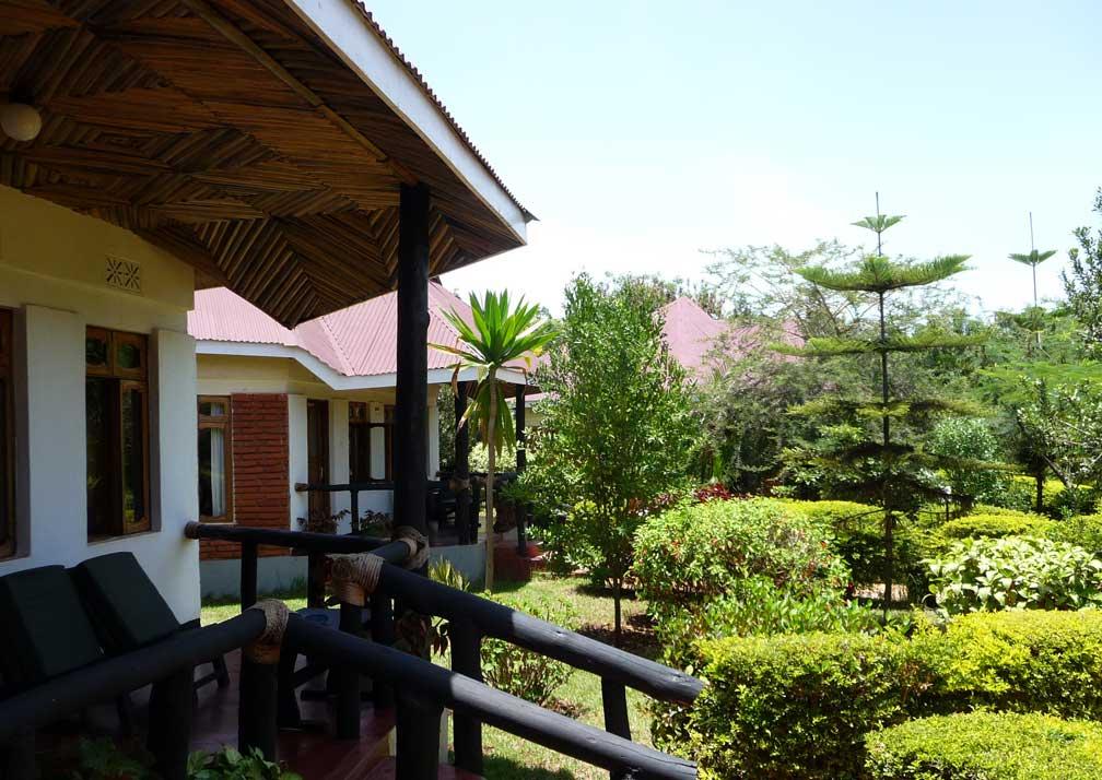 Bougainvillea-R19-2