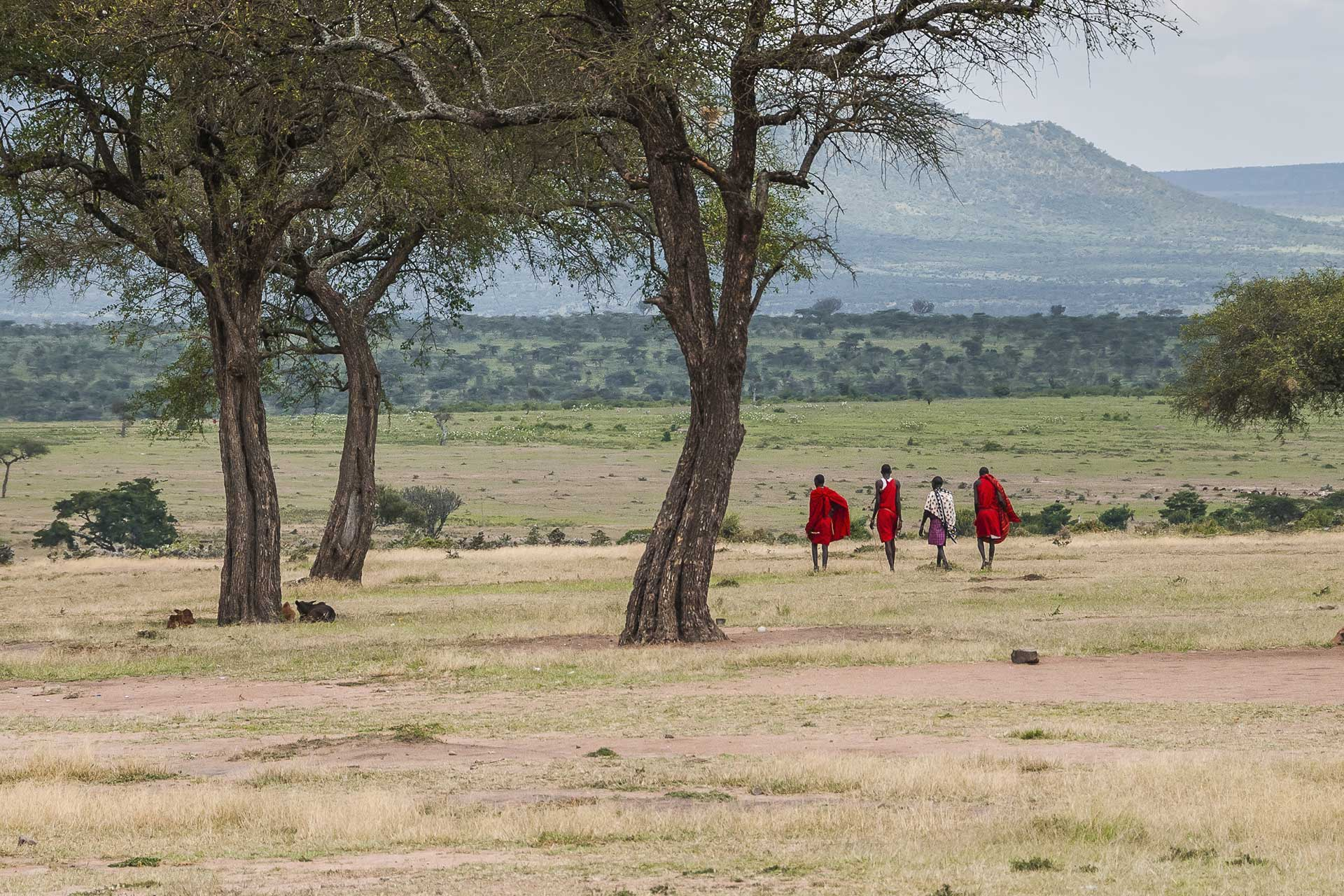 Maasai at sunset