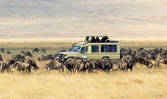 Serengeti wildebeest migration, Tanzania